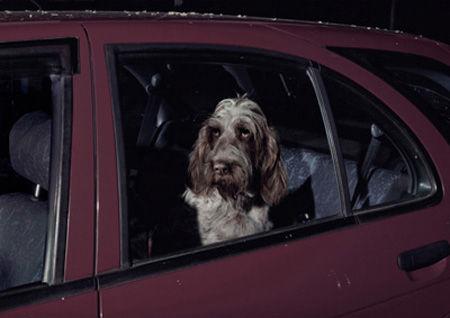 DogsinCars6_