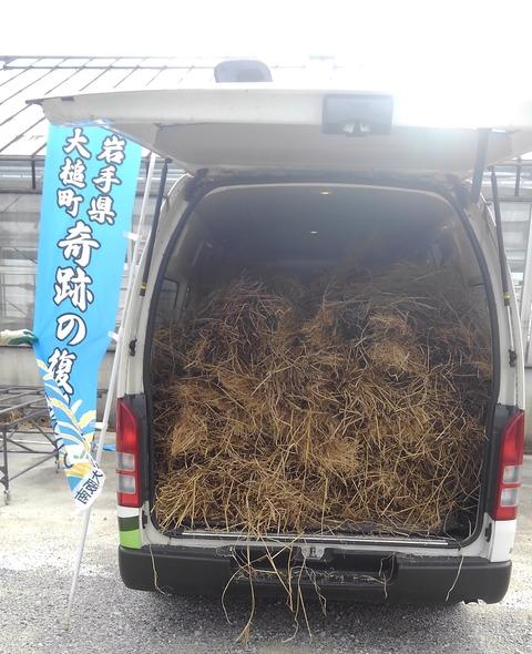 復興米稲わら取りに行った分