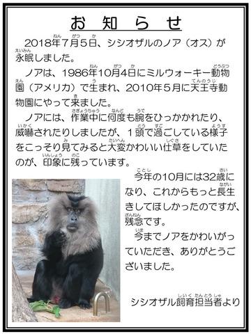 ☆訃報 シシオザル ノア 担当者より2