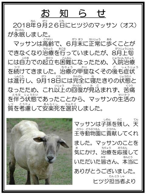☆訃報 ヒツジ マッサン 担当者より完成