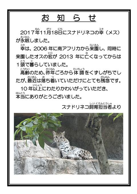 ☆訃報 スナドリネコ・ユキ 担当者より-2