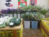 お花もお手頃価格です。