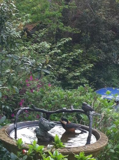 バードバスに水浴びに来たヤマガラ