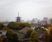 2010.11.13 色づく浅草寺境内