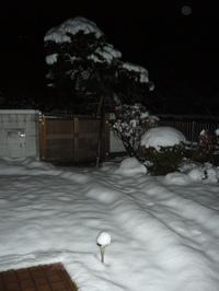 2010.3.9 ウメサンんちの庭in桶川
