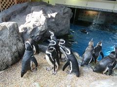 ペンギン群像