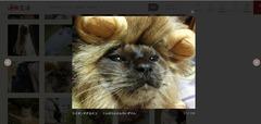 ライオンすぎる猫