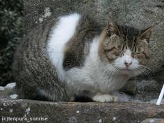 墓地猫・1