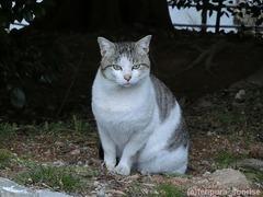 墓地猫・2