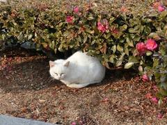 公園の白猫ちゃん