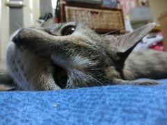 梅雨入り猫眠い