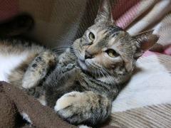 ラウラ「猫の日にゃんだから」