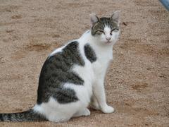 さくら猫・2