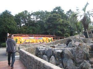 22日より元祖カピバラの露天風呂開始です。