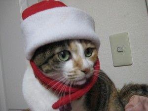 当館もクリスマス飾り始めました。