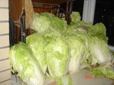 大量の白菜