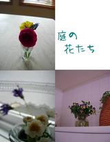 いつもの花だけど。