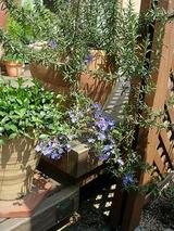 maki邸お庭