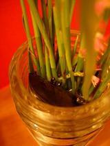 花瓶の中には竹炭