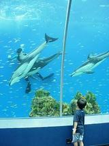 八景島のイルカ