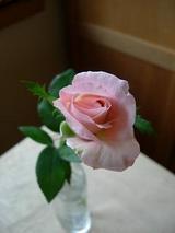 毎度〜、いつものバラです。