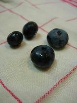 初収穫のブルーベリー