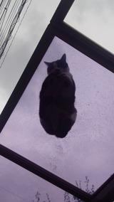 透明下から猫