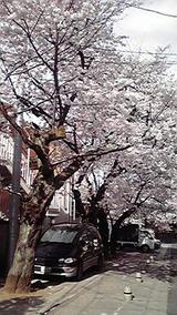 桜の頃ならば