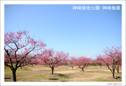 神崎緑地公園・神崎梅園 写真1