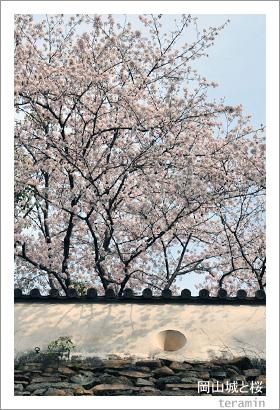 岡山城と桜3