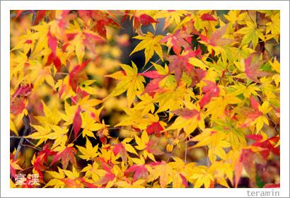 豪渓の紅葉 写真3