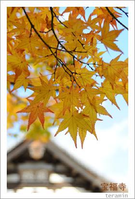 宝福寺の紅葉 写真2
