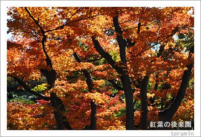 紅葉の後楽園2