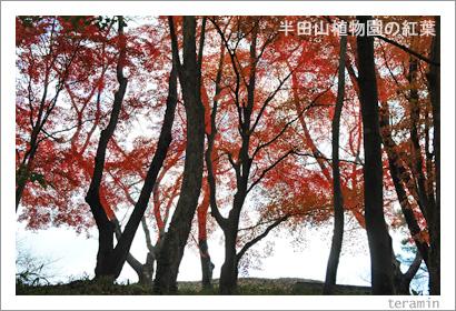 半田山植物園の紅葉 写真2