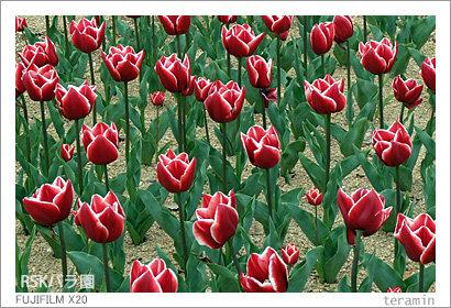 rose140413_2