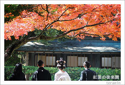紅葉の後楽園1