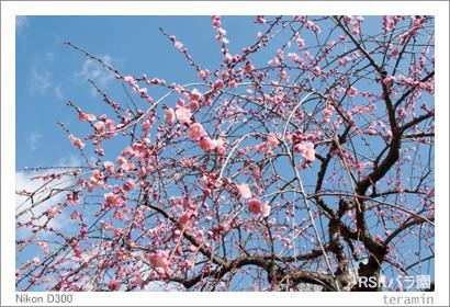 rose160221_2