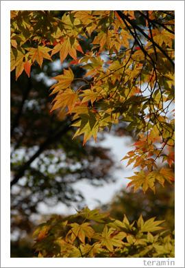 後楽園・秋4