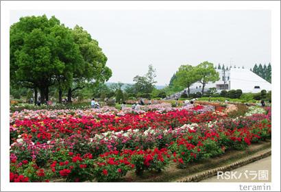 RSKバラ園 写真1