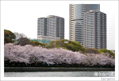 桜クルーズ1