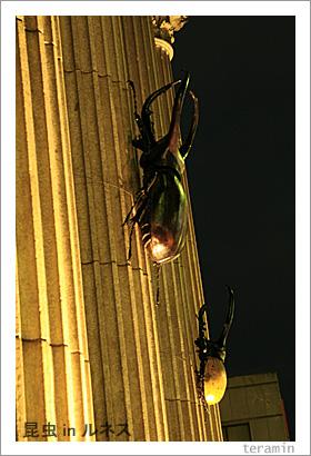 ルネスin昆虫 写真2