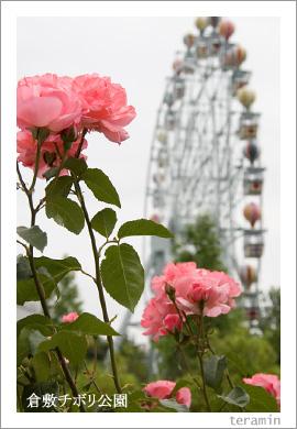 倉敷チボリ公園のバラ2