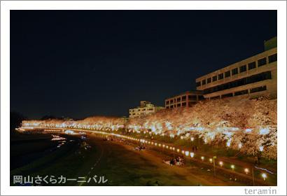 岡山さくらカーニバル 夜桜 写真2