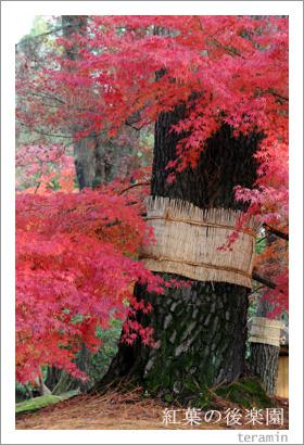 後楽園の紅葉写真4