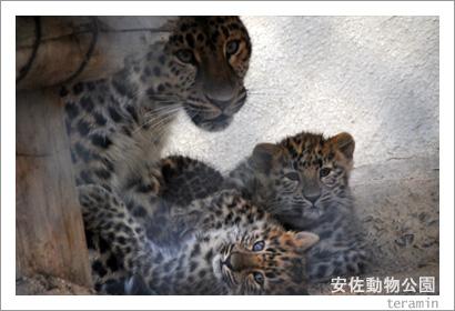 安佐動物公園 写真2