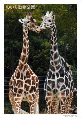 のいち動物公園 写真1