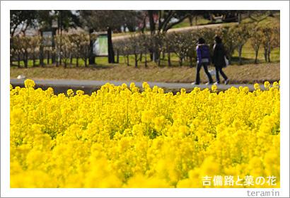 吉備路と菜の花 写真2