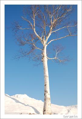 蒜山雪景色4