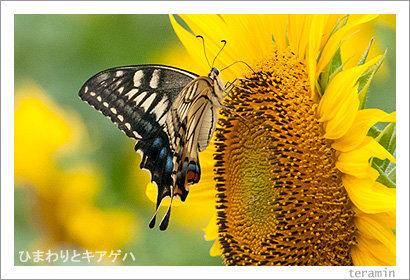 kokubunji120714_4