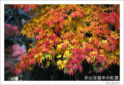井山宝福寺の紅葉5